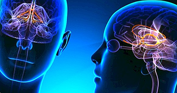 Can Internet use prevent and slow down cognitive decline?
