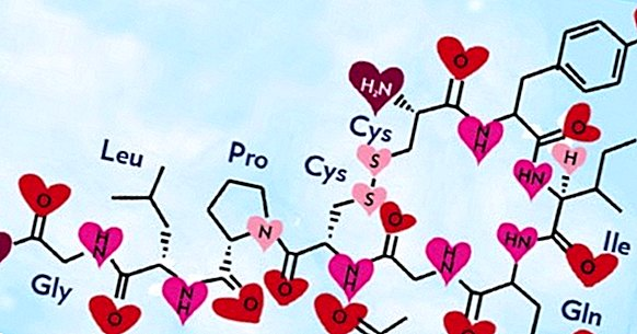 What is oxytocin and what functions does this hormone do?
