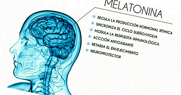 Melatonin: the hormone that controls sleep and seasonal rhythms