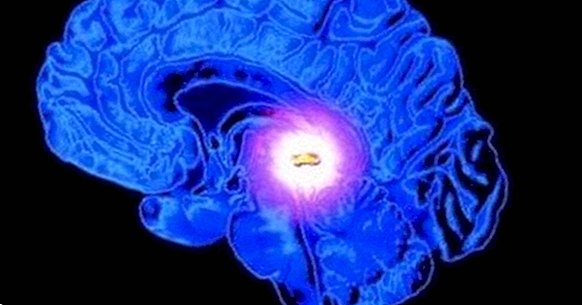 Pituitary gland (hypophysis): the nexus between neurons and hormones