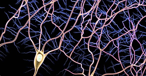 Via afferent and via efferent: the types of nerve fibers