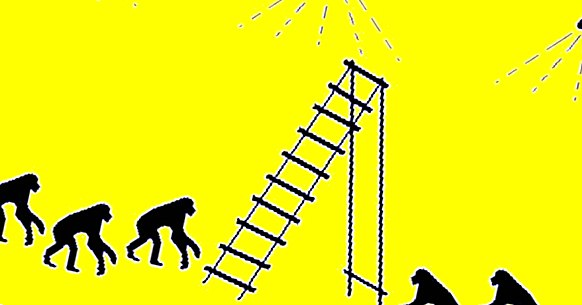 The experiment of monkeys, bananas and ladders: obeying absurd norms