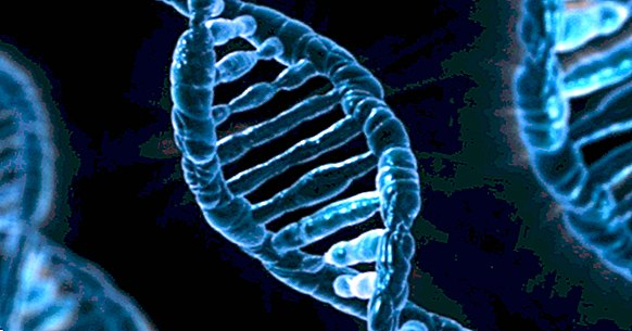 Are we slaves of our genes?