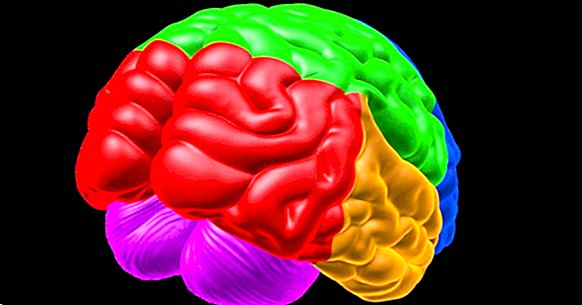 Cognitive psychology: definition, theories and main authors