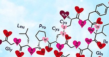 What is oxytocin and what functions does this hormone do? - neurosciences